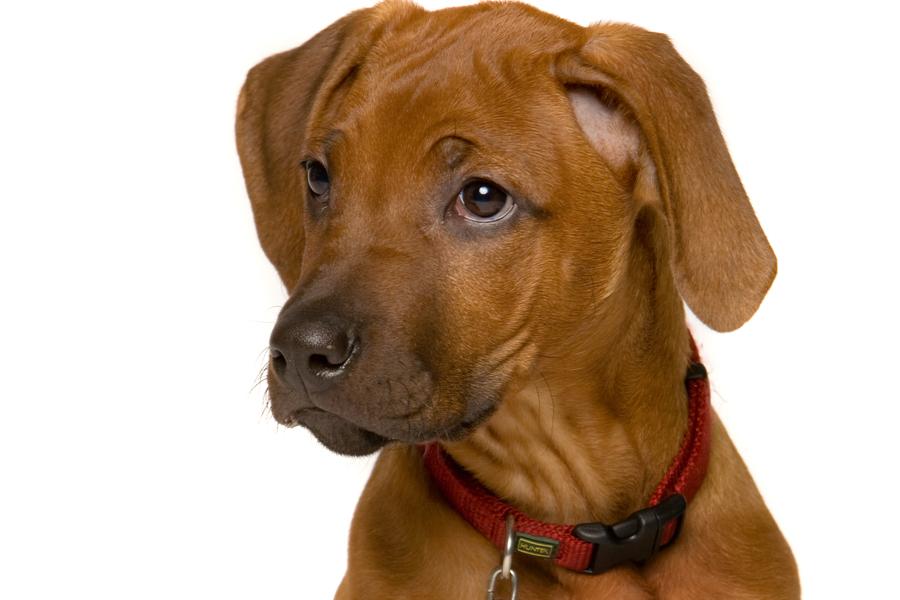 kennzeichnung und registrierung von hunden land tirol
